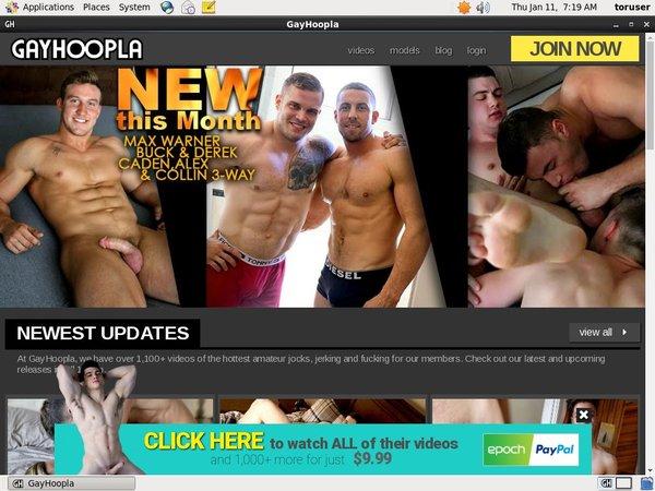 Gay Hoopla Account